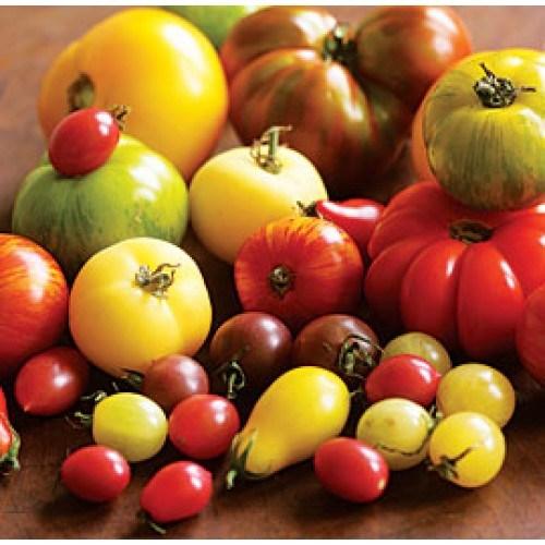 jenis-budidaya-tomat
