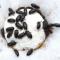Manfaat dan Khasiat Semut Jepang bagi Kesehatan